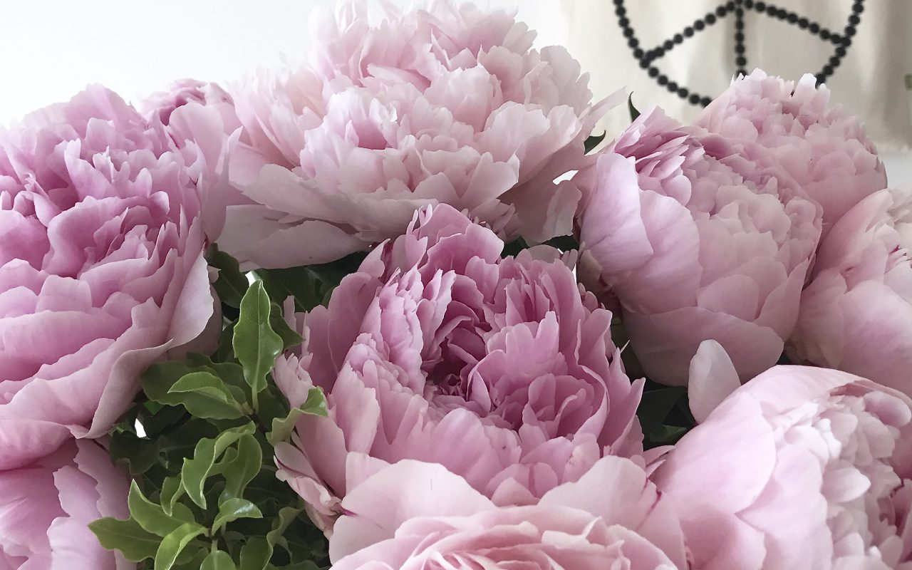 freedom from the peonies